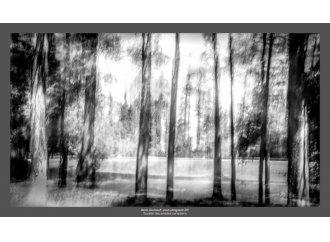 Forêt imaginaire