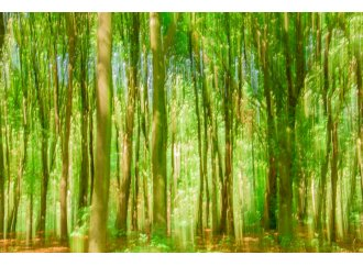 Fairy Forest 1